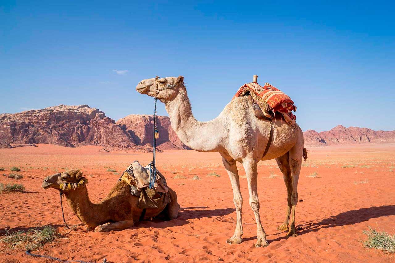 Lunas de miel en Oriente Medio